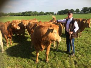 Kees Hietberg bij zijn koeien uit de Limousin